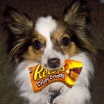 I Love Reese's!