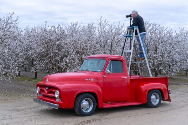 """photo of my 1955 Ford F100 named """"Art"""" which now sports the license plate """"ART NSFW"""" because I do mostly nude photography"""